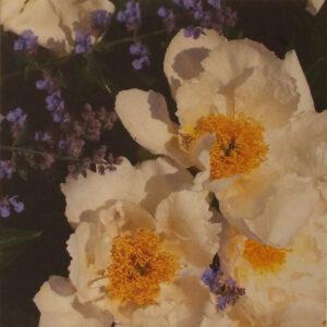 Camellias & Blue Flash, Archival Metallic Photo by Deborah Herndon, 10in x10in, $140 (July 2019)