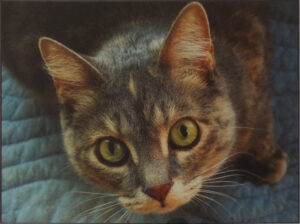 Coquette the Cat, Archival Metallic Photo by Deborah Herndon, 10.25in x 13.75in, $175 (July 2019)