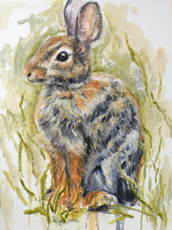 Hare Alert by Charlotte Richards (MG: March 2014)