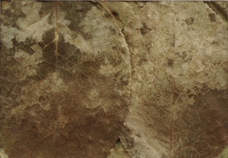SECOND PLACE: StilI I Rise, Mixed Dried Leaves by Karen Fitzgerald (Dec. 2013-Jan. 2014)