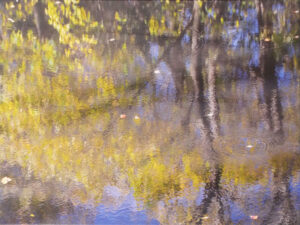 Autumn on the Canal Photograph on Canvas by Lee Cochrane (April 2016)
