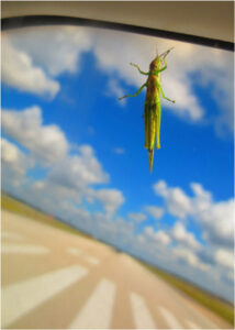 Airplane Hitchhiker, Photography by Penny A Parrish (Dec. 2013-Jan. 2014)