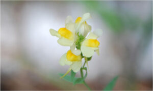 Fayette Wildflower, Photography by Penny A Parrish (Dec. 2013-Jan. 2014)