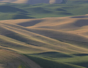 Palouse Fields, Photography by Linda Agar-Hendrix, 17in x 22in, $245 (February 2020)