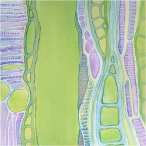 HONORABLE MENTION: Xylem 2, Ink and Gouache on Paper by Anna Velkoff Freeman (July 2014)