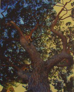 Tree Looking up, Metallic Photograph by Deborah D Herndon (June 2014)