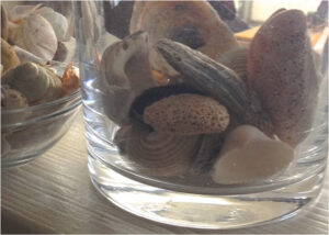 Only the Shells arr Left, Photography by Elizabeth Shumate (December 2014/January 2015)