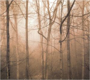 Copper Mist, Photography by Karen M Barnhart (October 2014)
