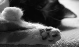 Paws Pause, Photograph by Penny A Parrish (April 2014)