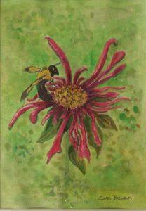 Bee Balm Bee, Watercolor by Suzi Bevan (December 2014/January 2015)