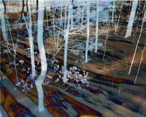 Fantasy Forest, Archival Giclee Print by Carolyn R Beever (May 2016)