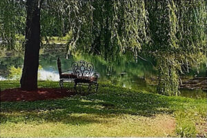 Under the Weeping Willow Tree, Photograph by Lee Cochrane, 8in x 12in, $100 (November 2020)