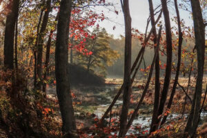 Bending Time, Digital Photograph by Chris McClintock, 12in x 18in, $200 (Dec. 2020 - Jan. 2021)