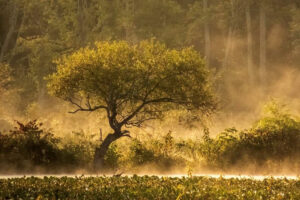 Born of the Mist, Digital Photograph by Chris McClintock, 12in x 18in, $150 (Dec. 2020 - Jan. 2021)