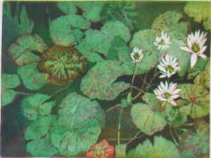Ledew Gradens Water Lily Pads, Etching-Acquatint by David Brosch, 18in x 24in, $450 (Dec. 2020 - Jan. 2021)