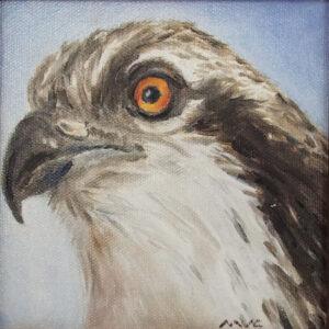 Osprey, Oil on Canvas by Michele Vonnegut Costello, 6in x 6in, $175 (Dec. 2020 - Jan. 2021)