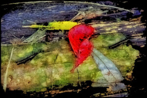 Take Heart, Photography by Norma Woodward, 12in x 18in, $195 (Dec. 2020 - Jan. 2021)