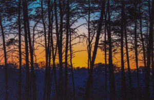 Sunset Through the Pines, Photography by David C Kennedy  (February 2015)