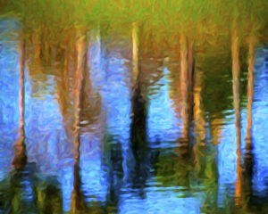Trees Reflected, Photography by David Kennedy (June 2015)