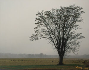 Tree in the Fog, Photography by Sheila R Jones  (February 2015)