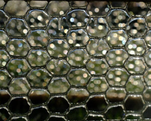 Chicken Wire, Photography by Mary Johnson-Mason, 8in x 10in, $75 (February 2021)