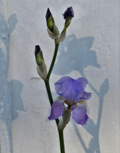 Shadows, Photography by Judy LaFratta, 17in x 11in, $100 (February 2021)