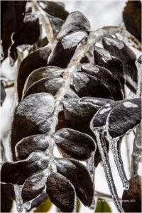 HONORABLE MENTION: Winter Velvet, Phtograph by Chris McClintock, 18in x 12in, $200 (May 2021)