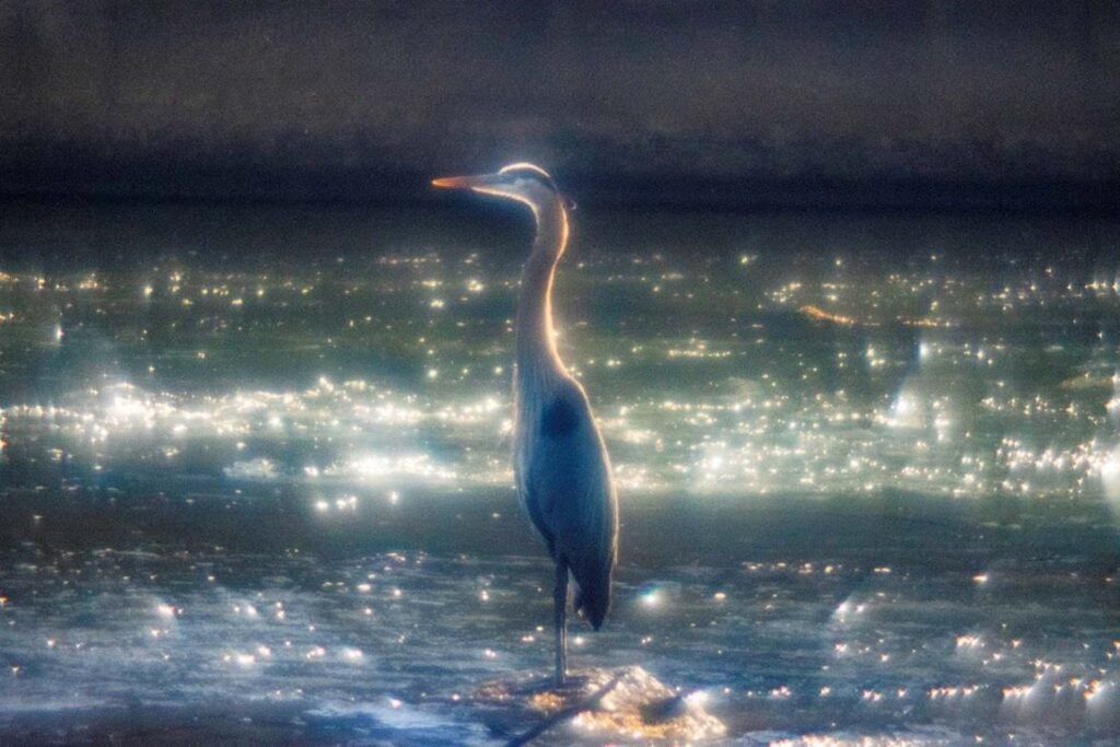 HONORABLE MENTION: Wake Up and Sparkle, Photograph on Aluminum by Chris McClintock, 20in x 30in, $200 (July 2021)