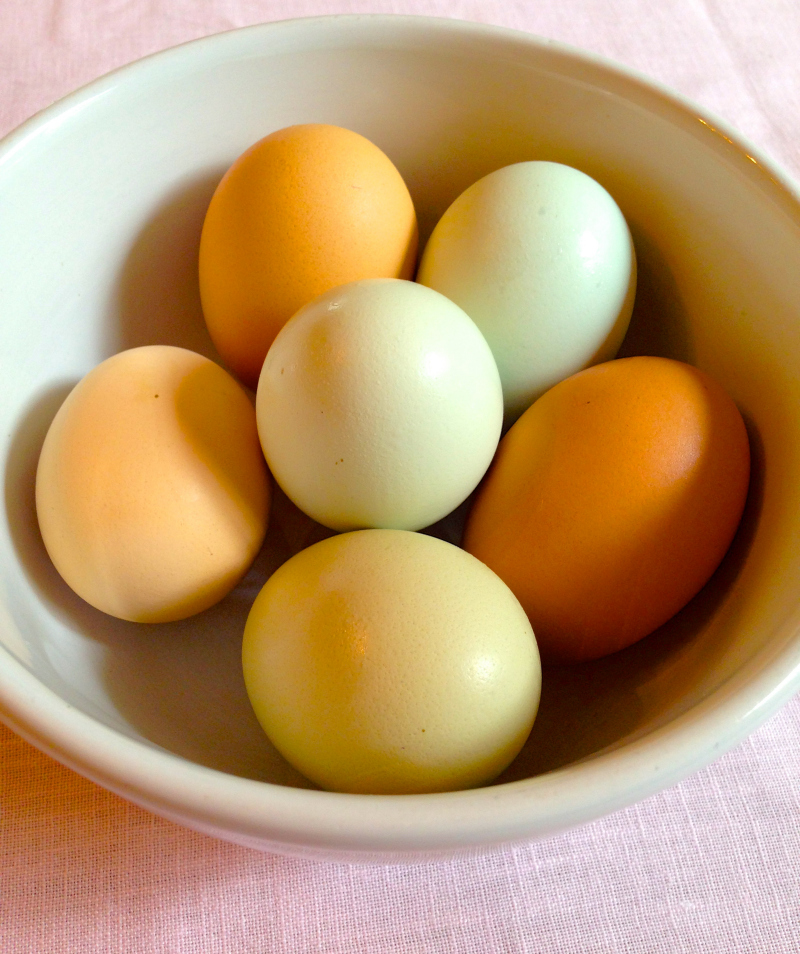 Free Range and Organic Chicken Eggs | Black Girl Chef's Whites