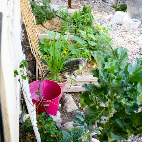 Cece in the Little Organic Garden
