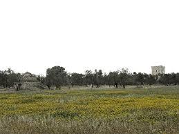 molfetta countryside