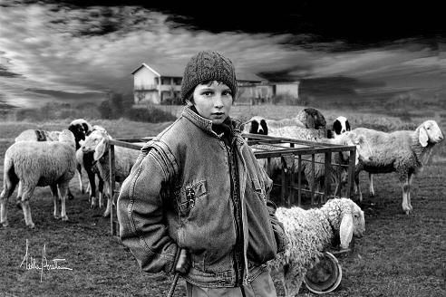 """""""Flock"""", a true shepherd ... Award-winning and exhibited at Agora Gallery in New York."""