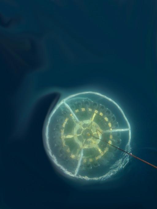 immagine di un sistema di campionamento 'Ctd-rosette' equipaggiato con una sonda multiparametrica (Ctd) utile a misurare le principali variabili chimico-fisiche dell'acqua (ad esempio la temperatura e la salinità) e con bottiglie di tipo Niskin utilizzate per raccogliere campioni dalle profondità oceaniche. (Credits: Gian Marco Luna).