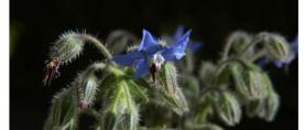 I segreti delle piante: Fascination of Plants Day Italia 2017