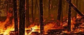 Più incendi con i cambiamenti climatici