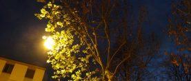 Le luci artificiali alterano il 'riposo' degli alberi?