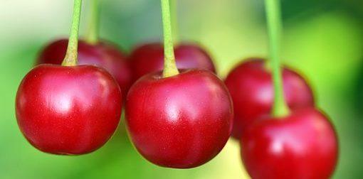 La ciliegia: un frutto delizioso che nutre, rinforza e migliora il sonno e l'umore