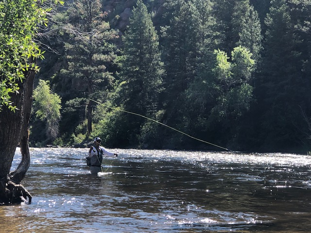 Fly fishing on the Cache la Poudre River