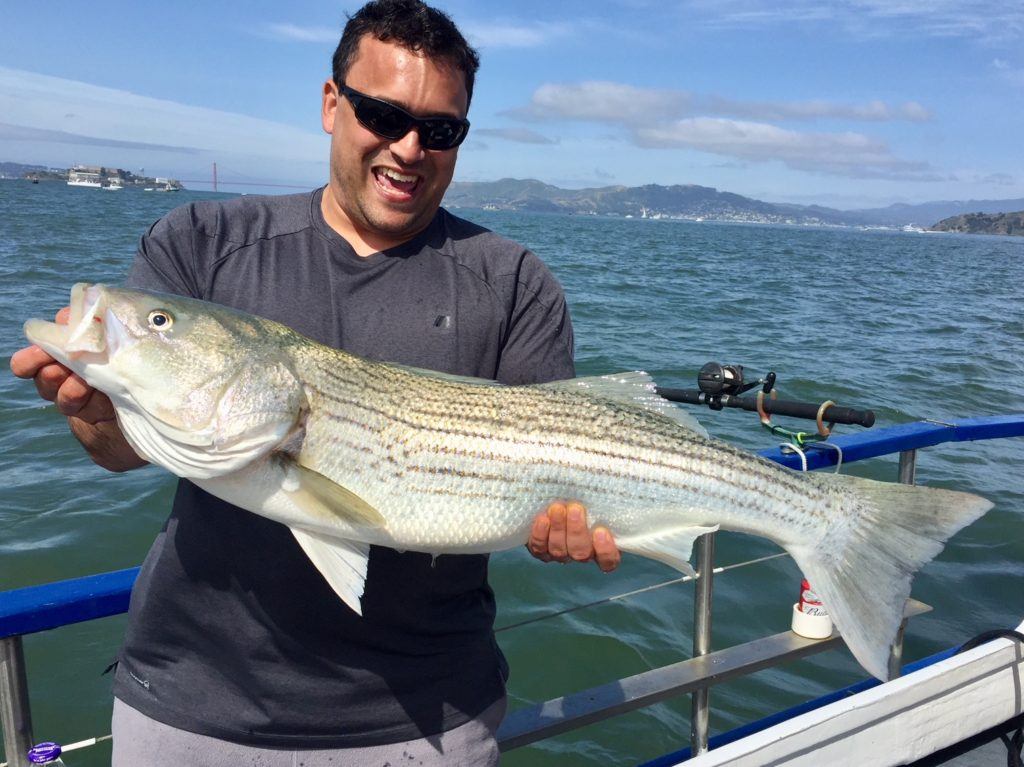 Smiling man holding large striped bass on boat