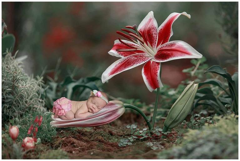 DC Newborn Photographer