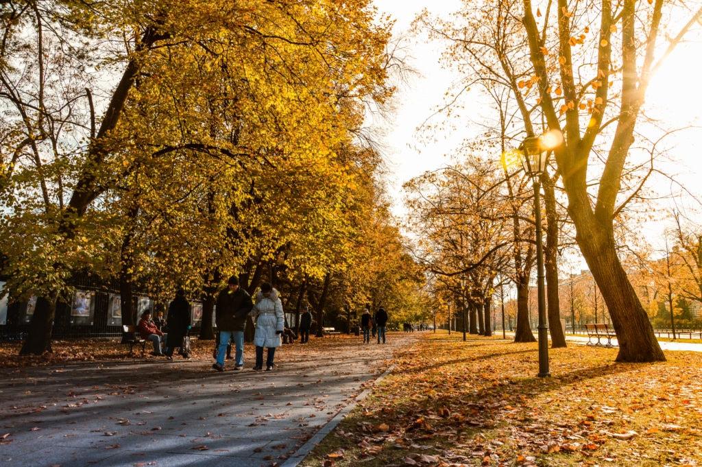 fall foliage in Ottawa