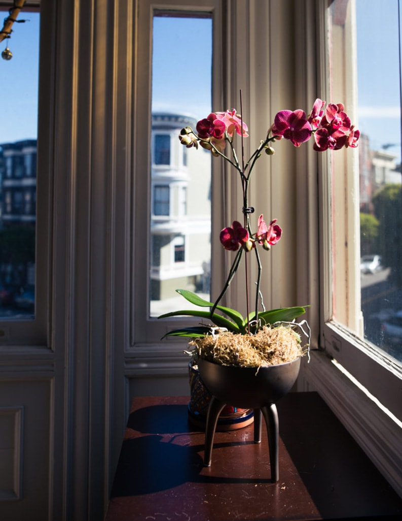 flowers in a pot on a window sill of interior house in Ottawa