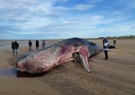 Fukushima Whale