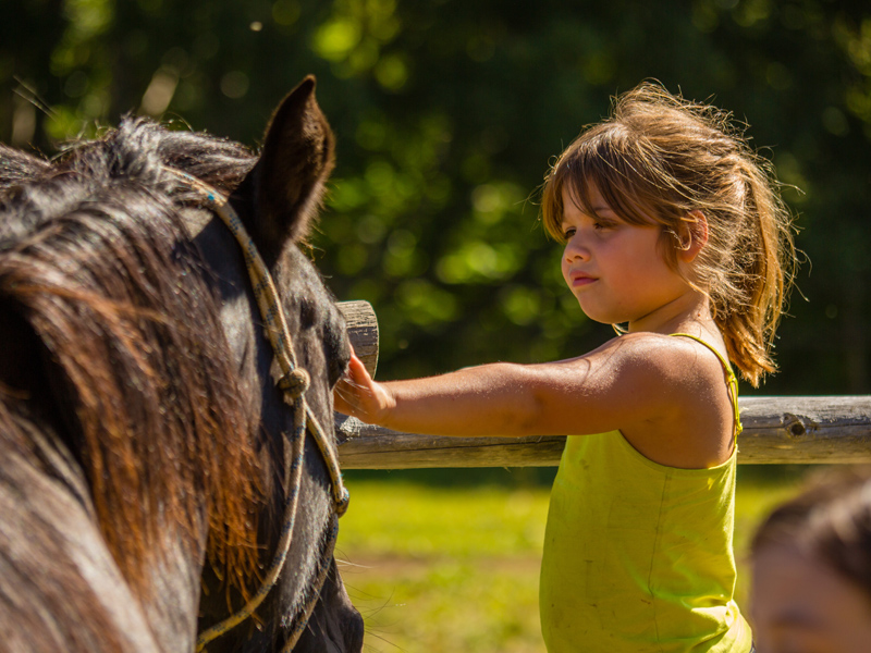 Child pats a horse