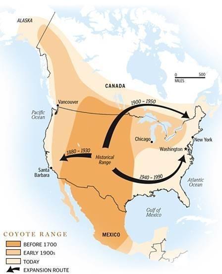 coyote range map
