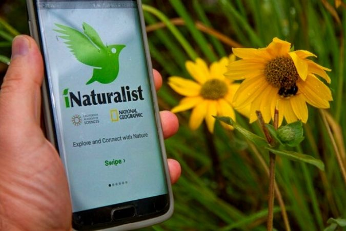 naturalist notebook discussion