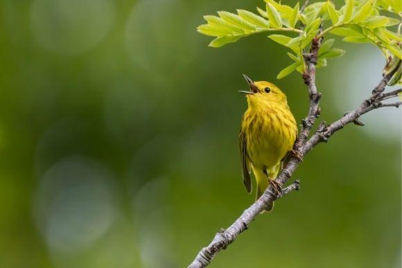 bird walks cleveland