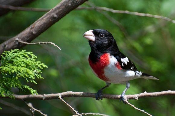 birding walks cleveland