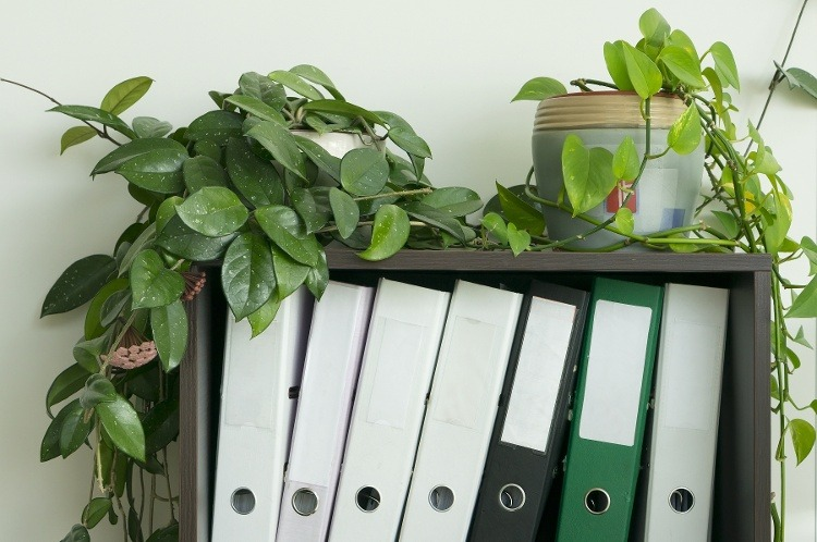 Spring Cleaning Tips: Help Your Senior Mom Organize Her Clutter