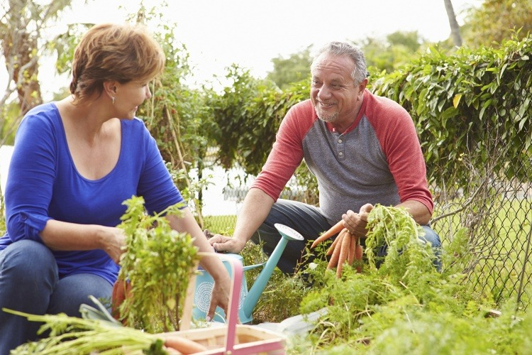 Volunteering Offers Benefits and Opportunities for Seniors